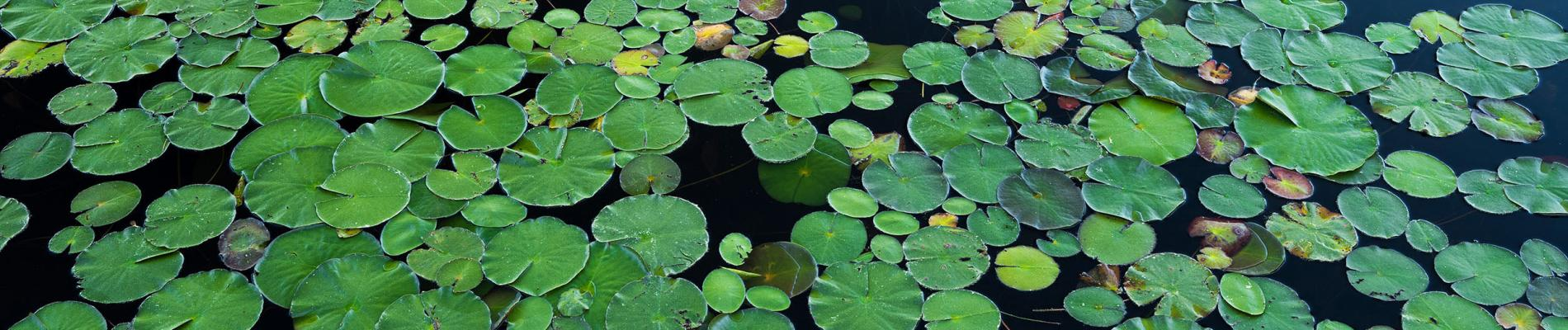 Pond Life: Bringing Nature to Life via Zoom