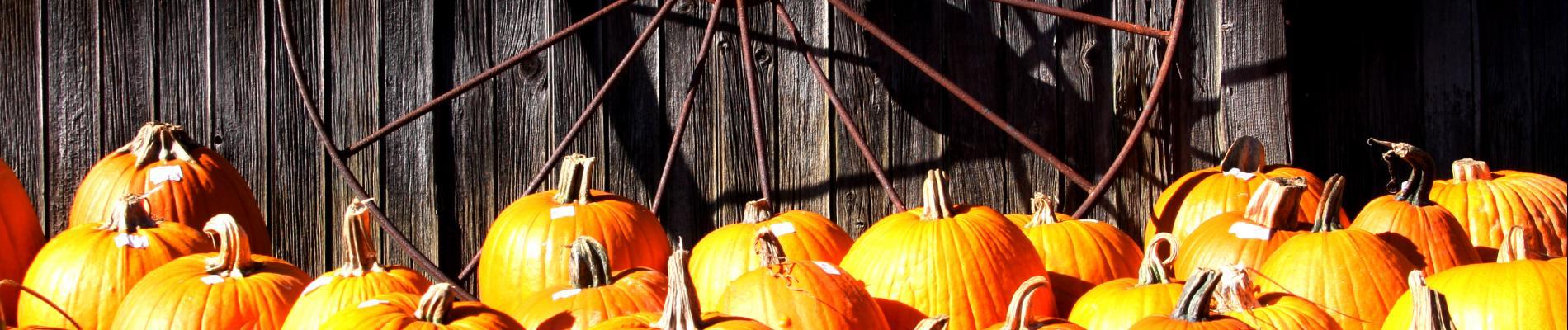 Oktoberfest at Beverly Park