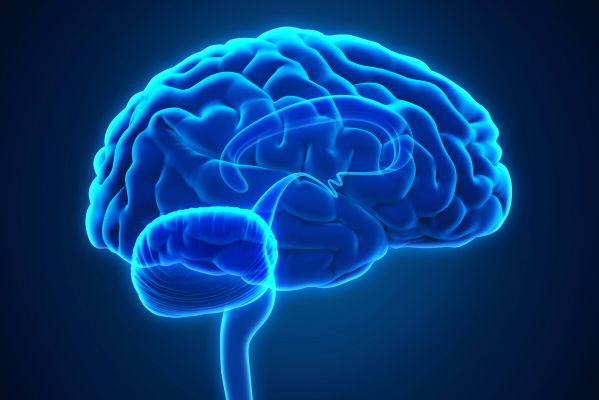 Exercise: Cognitive Candy for the Brain