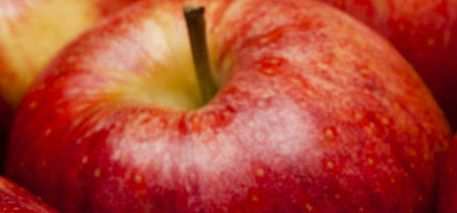 An Apple a Day: How Lifestyle Impacts Health