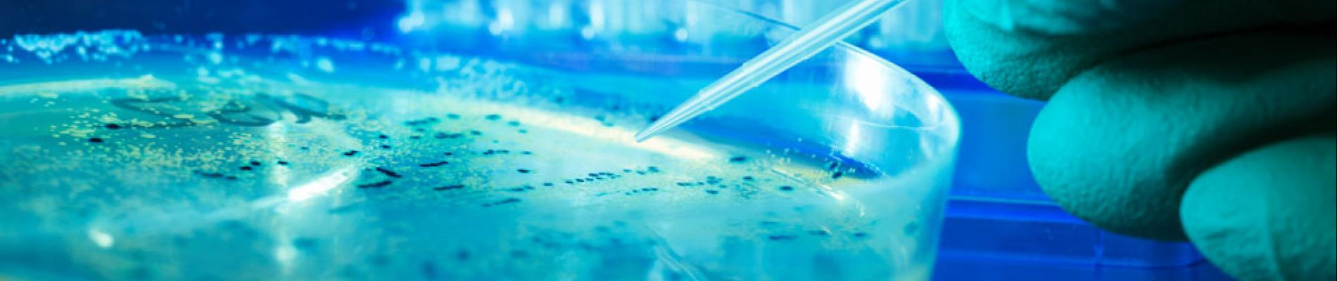 Stem Cells: A Clinical Review