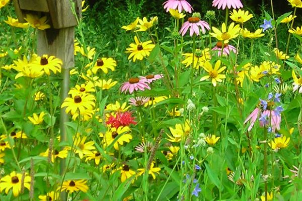 The Beauty of Native Plants
