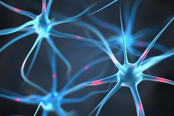 Brain Neurobics
