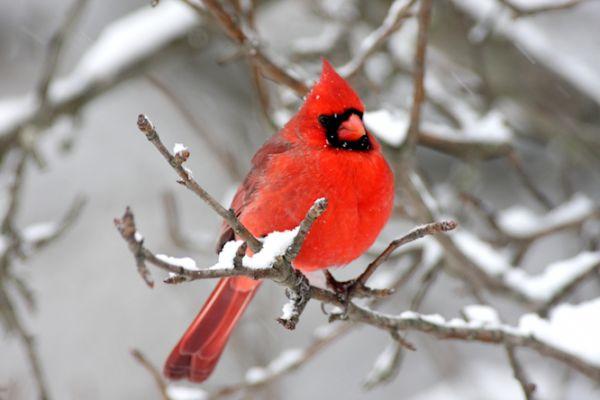 Oakland Audubon Society