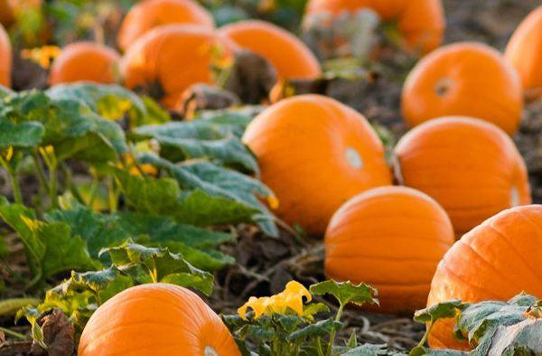 Next Annual Oktoberfest!