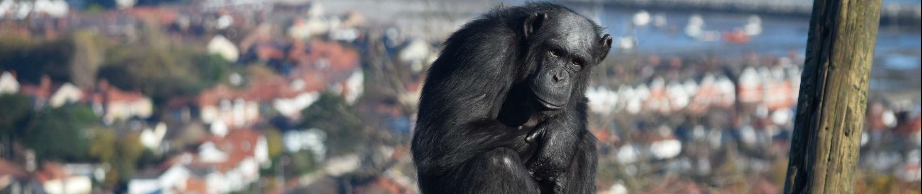 People & Primates